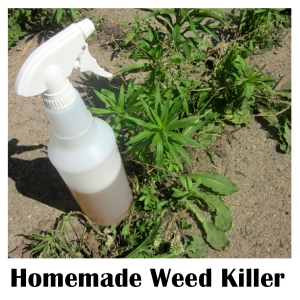 Homemade Vinegar Weed Killer